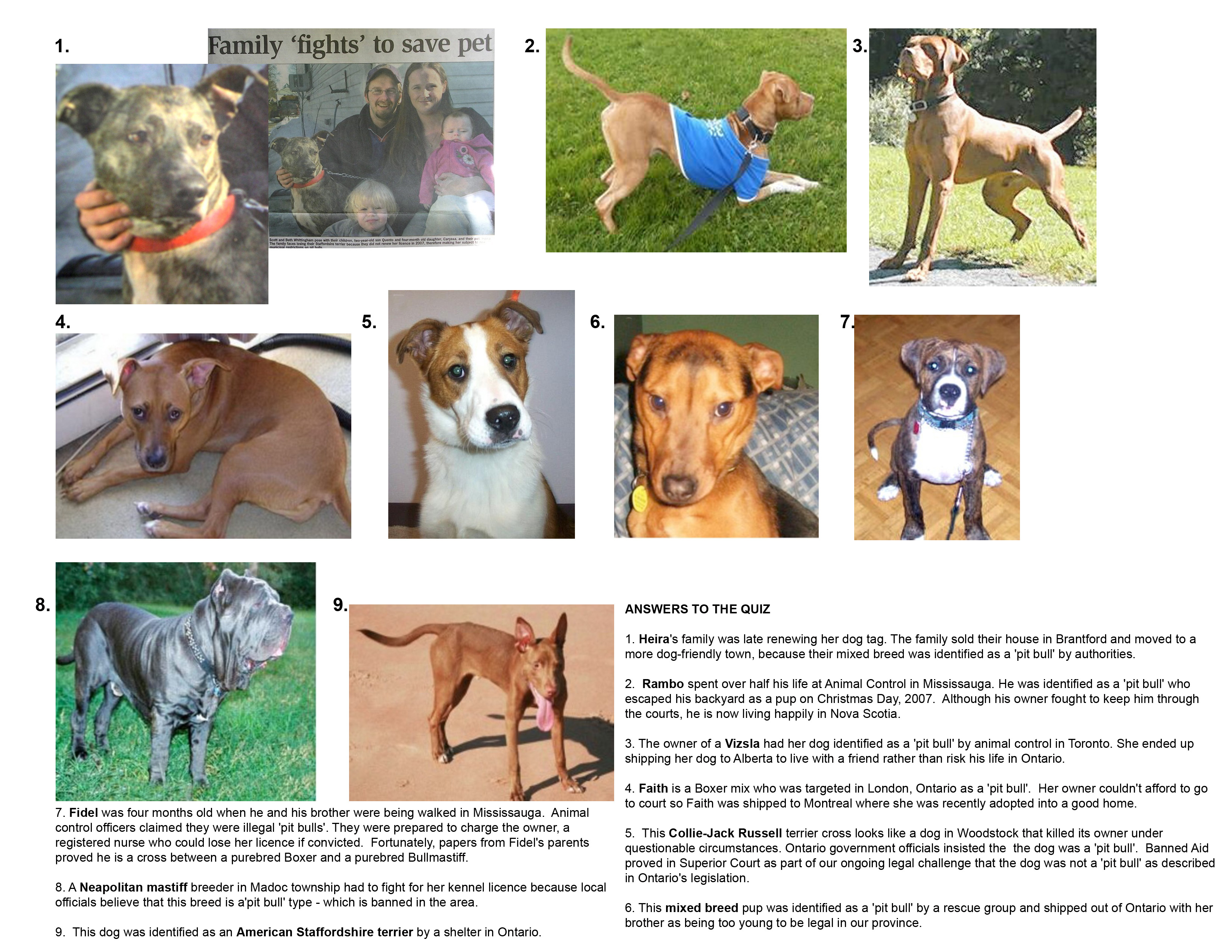 Displaying images for vicious dog breeds list - Displaying Images For Vicious Dog Breeds List 13